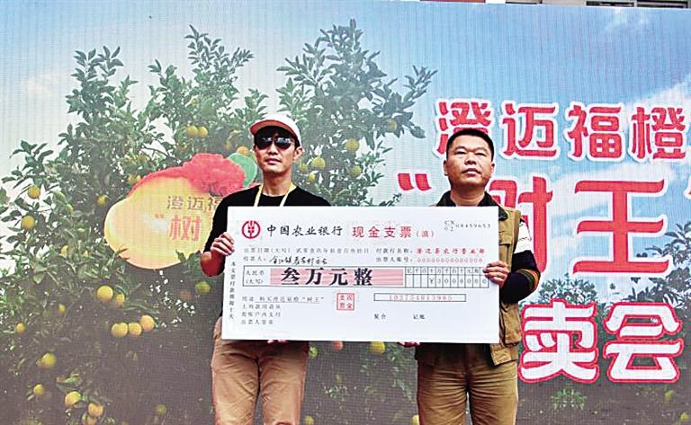 """澄迈福橙""""树王""""拍出3万元高价 资金将全部捐给贫困村"""